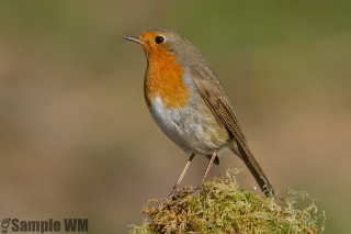 Uccelli_4